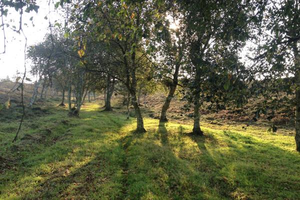 Friluftsgudstjeneste og en dag i paradisets have